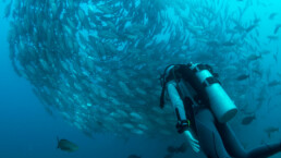 scuba diver swimming up to a swirl of fish